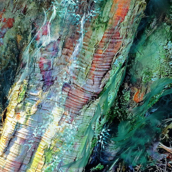 Digital Art - Bark L'verde  by Cindy Greenstein