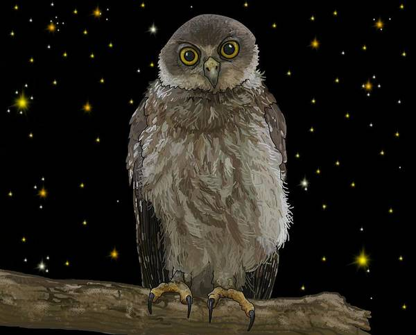 Drawing - Barking Owl At Night 1 by Joan Stratton