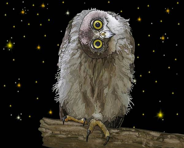 Drawing - Barking Owl At Night 2 by Joan Stratton