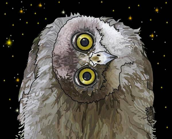 Drawing - Barking Owl At Night 3 by Joan Stratton