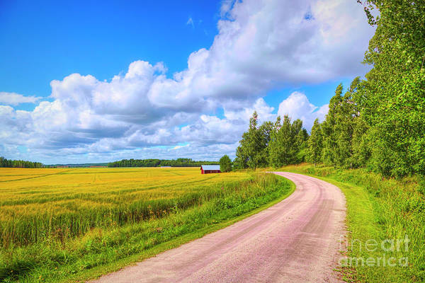 Wall Art - Photograph - Barley Fields by Veikko Suikkanen
