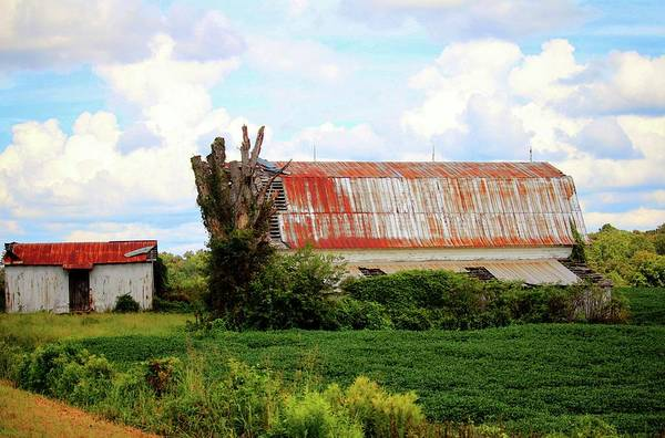 Photograph - Barn And Shed by Cynthia Guinn
