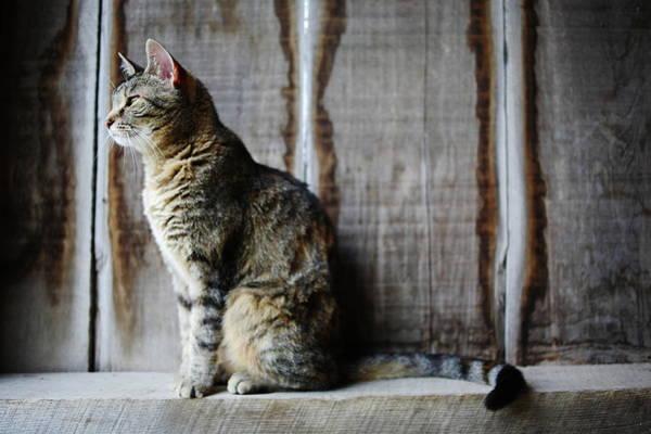 Barn Photograph - Barn Cat by Jimss