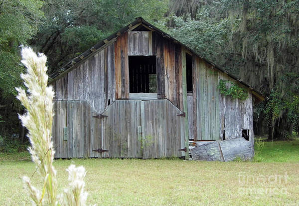 Photograph - Barn In The Woods by D Hackett