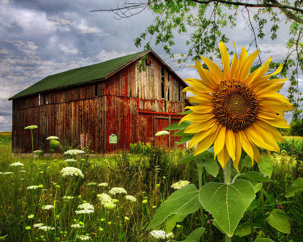 Photograph - Barn Meadow Flowers IIi by Debra and Dave Vanderlaan