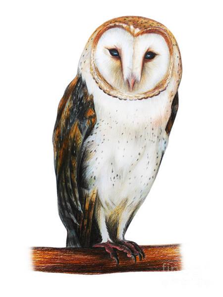 Farms Digital Art - Barn Owl Drawing Tyto Alba by Viktoriya art