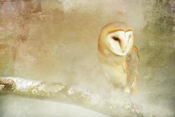 Wall Art - Digital Art - Barn Owl In Fog by Terry Davis