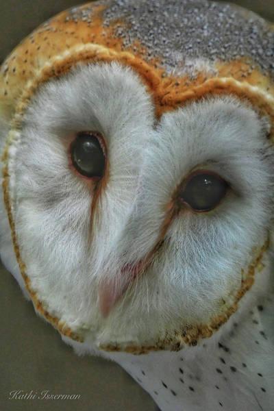 Macro Wall Art - Photograph - Barn Owl Portrait by Kathi Isserman
