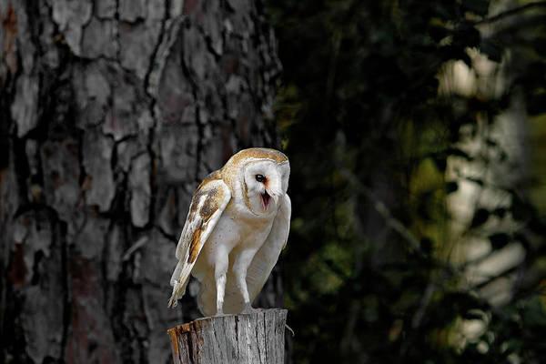 Photograph - Barn Owl by Ronnie and Frances Howard