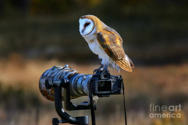 Nocturnal Wall Art - Photograph - Barn Owl Tyto Alba Sitting On A Camera by Don Mammoser