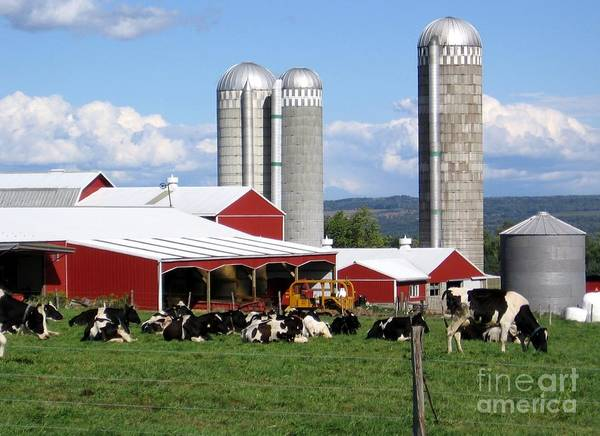 Photograph - Barn Silos And Cows Finger Lakes New York by Rose Santuci-Sofranko