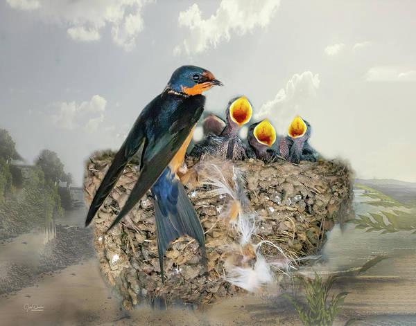 Photograph - Barn Swallow Nest by Judi Dressler