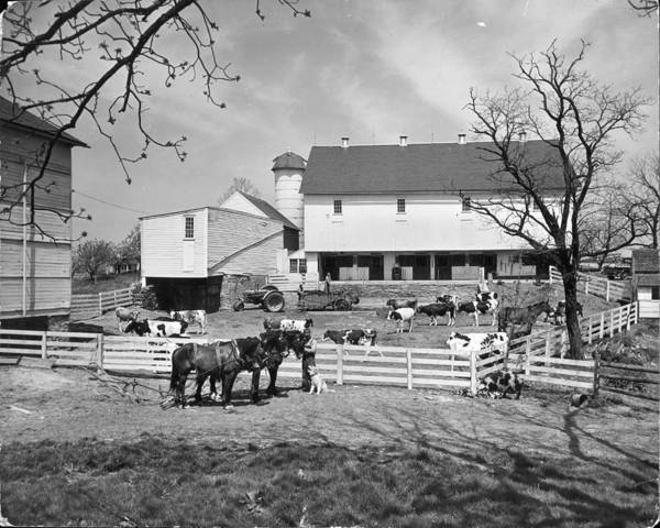 Lancaster County Photograph - Barnyard On Farm Of F Lyman Windolph In by Alfred Eisenstaedt