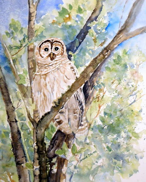 Painting - Barred Owl by Anna Jacke