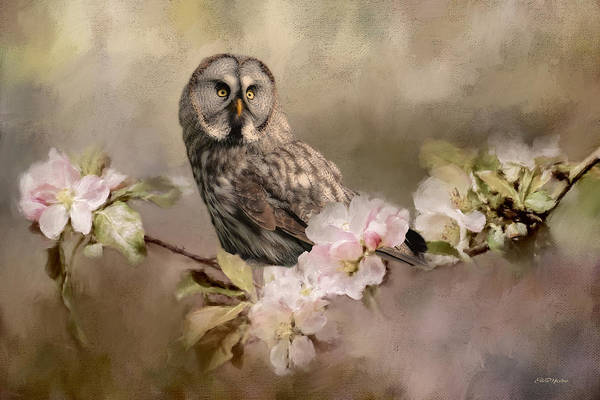 Painting - Barred Owl Floral - Painting by Ericamaxine Price