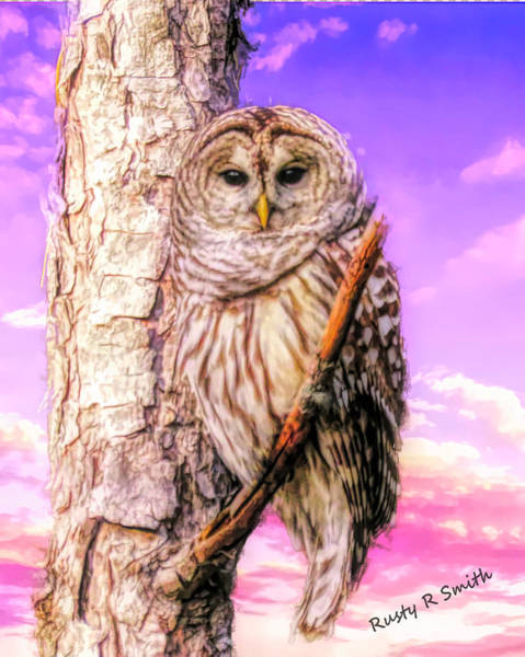 Digital Art - Barred Owl Perching On A Limb. by Rusty R Smith