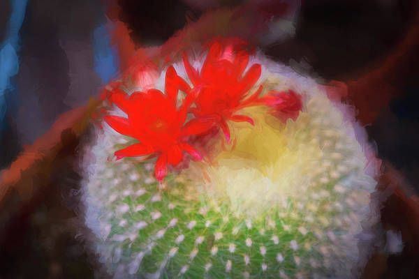 Photograph - Barrel Cactus Blossom 92 by Rich Franco