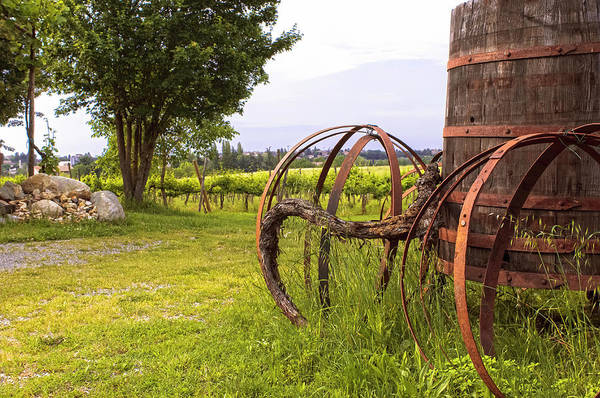 Winemaking Photograph - Barrel Hoops Old Grape Vine And Retired by Tier Images
