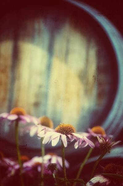 Photograph - Barrel by Shannon Kelly