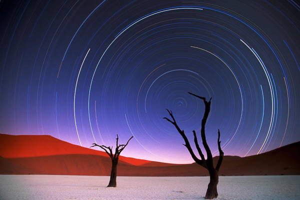 Spirituality Photograph - Barren Acacia Trees Acacia Horrida by Art Wolfe