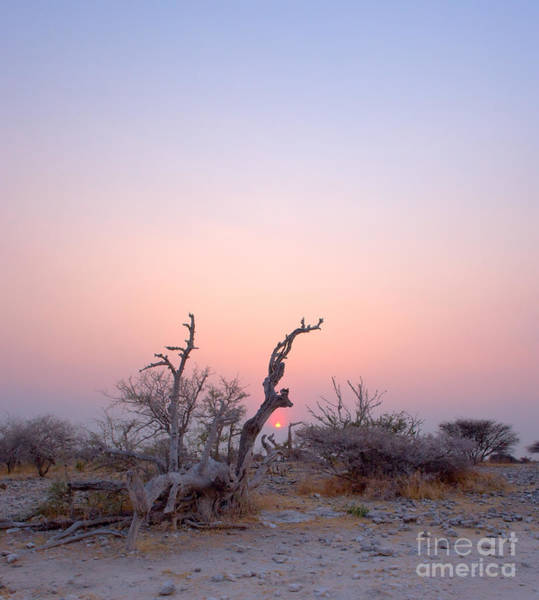 Wall Art - Photograph - Barren Landscape In Rocky Field With by Johan Swanepoel