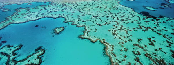 Reef Photograph - Barrier Reef by David Yarrow Photography