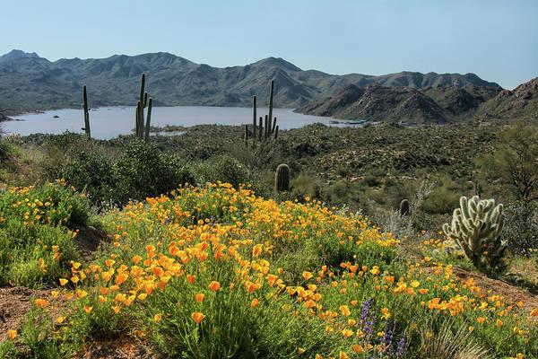 Photograph - Bartlett Lake Wildflowers 5532-030519 by Tam Ryan