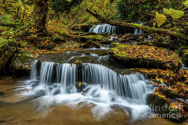 Photograph - Barton Mill Run Waterfalls by Thomas R Fletcher