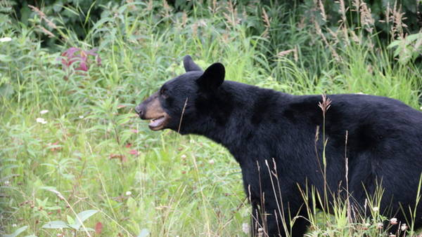 Elmendorf Photograph - Base Bears by Chris Christensen