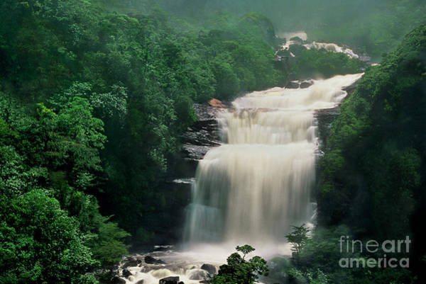 Photograph - Base Of Angel Falls Canaima National Park Venezuela by Dave Welling