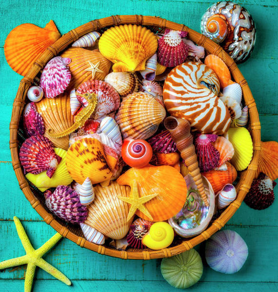 Wall Art - Photograph - Basket Full Of  Beautiful Seashells by Garry Gay