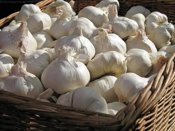 Wall Art - Photograph - Basket Full Of Garlic by Aloha 17