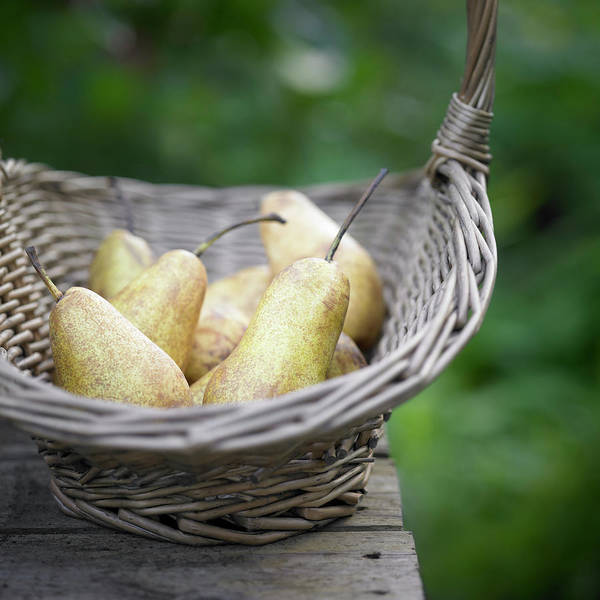 Picnic Basket Wall Art - Photograph - Basket Of Freshly Picked Pears by Dougal Waters