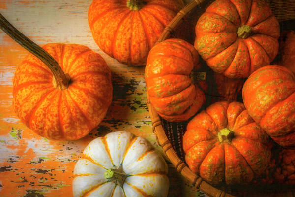 Wall Art - Photograph - Basket Of Small Orange Pumpkins by Garry Gay