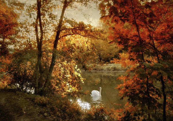 Photograph - Basking In Autumn by Jessica Jenney