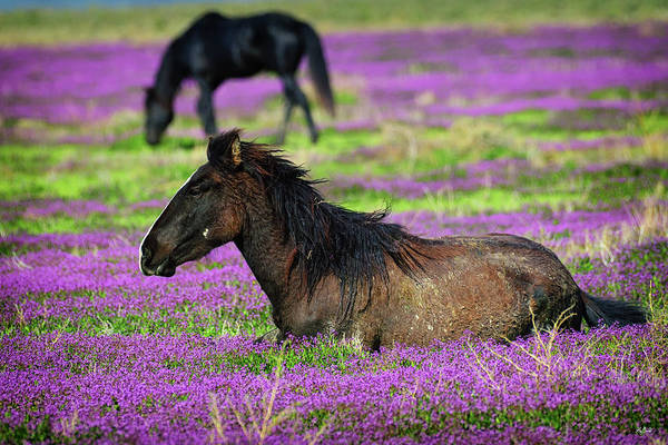 Photograph - Basking In The Wildflowers by Greg Norrell