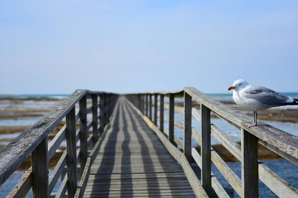 Yarmouth Photograph - Bass Hole Boardwalk  by Catherine Reusch Daley