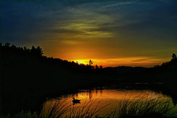 Photograph - Bass Lake Sunrise Duck by Meta Gatschenberger