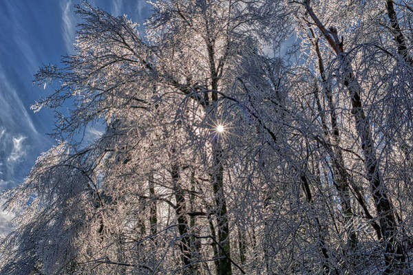 Photograph - Bass Lake Trees Frozen by Meta Gatschenberger