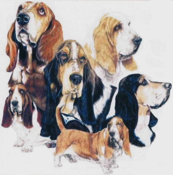 Drawing - Basset Hound Bunch by Barbara Keith