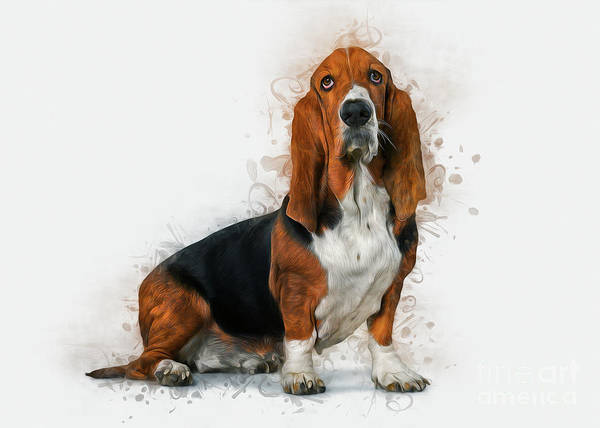 Photograph - Basset Hound by Ian Mitchell