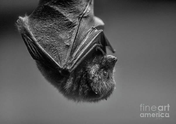 Photograph - Bat Cave by David Millenheft