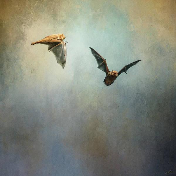 Photograph - Bat Flight by Jai Johnson