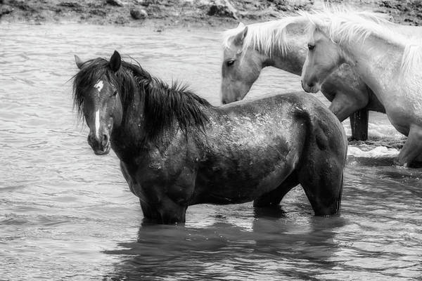 Photograph - Bathing Beauties Bw by Belinda Greb
