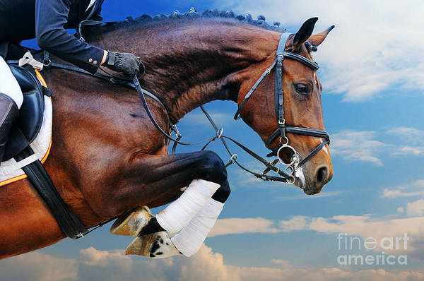 Event Wall Art - Photograph - Bay Horse In Jumping Show Against Blue by Pirita
