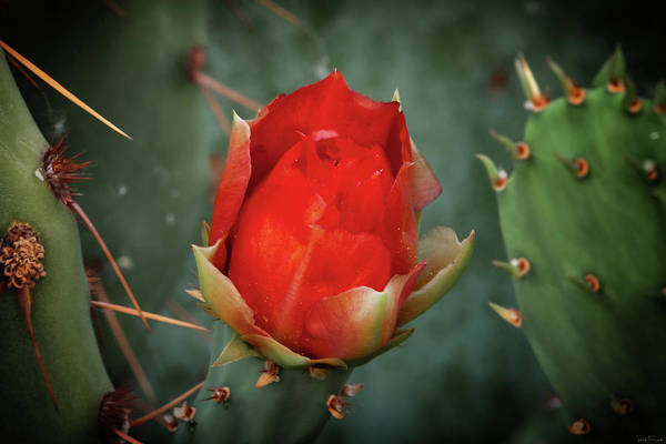 Photograph - Be My Valentine by Rick Furmanek
