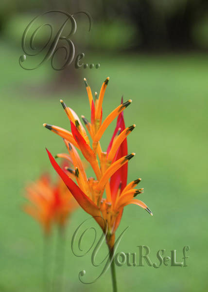 Lively Photograph - Be Yourself  by Betsy Knapp