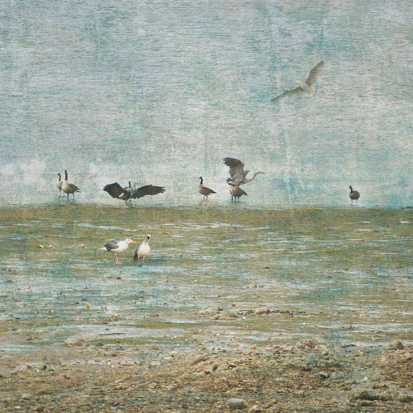 Photograph - Beach And Birds by Barry Weiss