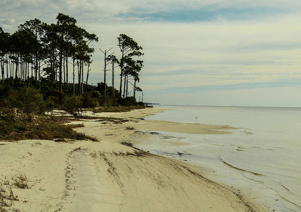 Photograph - Beach And Trees by Maggy Marsh