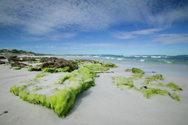 Seaweed Photograph - Beach At The Coast, Kangaroo Island by Thorsten Milse / Robertharding